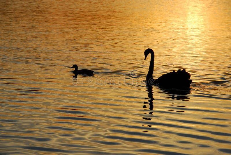 Amigos na lagoa dourada fotografia de stock royalty free