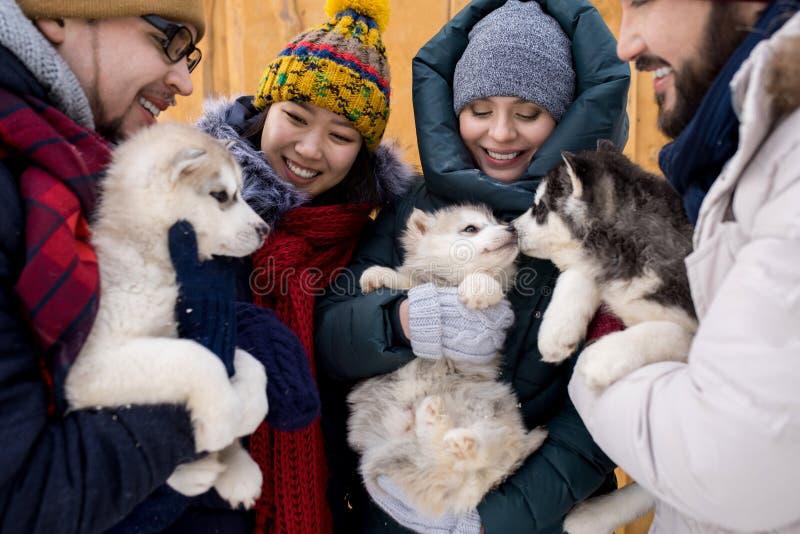 Amigos que jogam com cachorrinhos bonitos fotos de stock royalty free