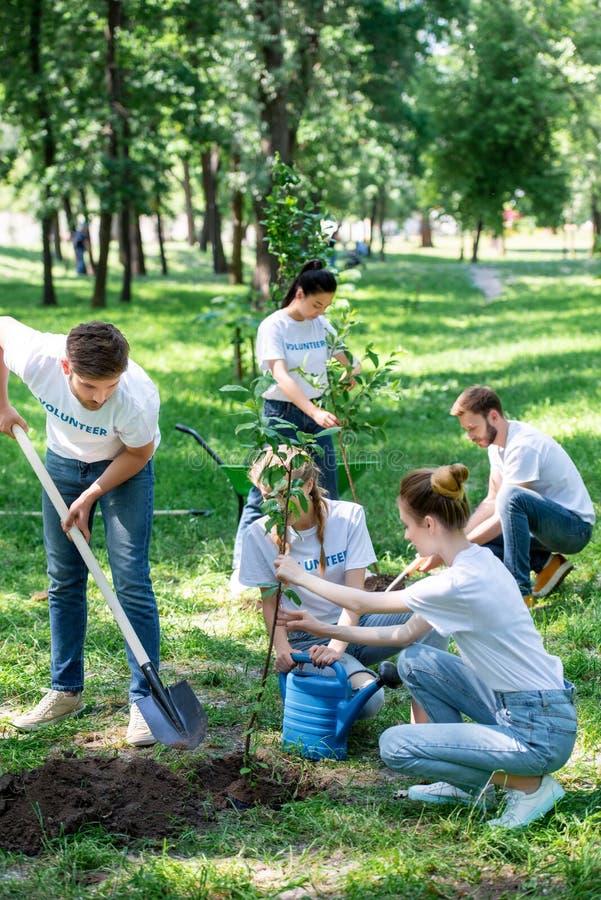 amigos que oferecem e que plantam árvores novas imagem de stock royalty free