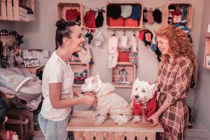 Amigos que ríen mientras que toma la ropa en sus perros lindos imagenes de archivo