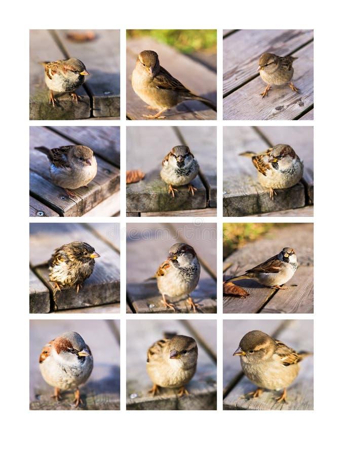 Amigos Twitting del collage imágenes de archivo libres de regalías