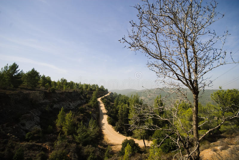 Download Aminadav Forest In Central Israel Stock Photo - Image: 14108576