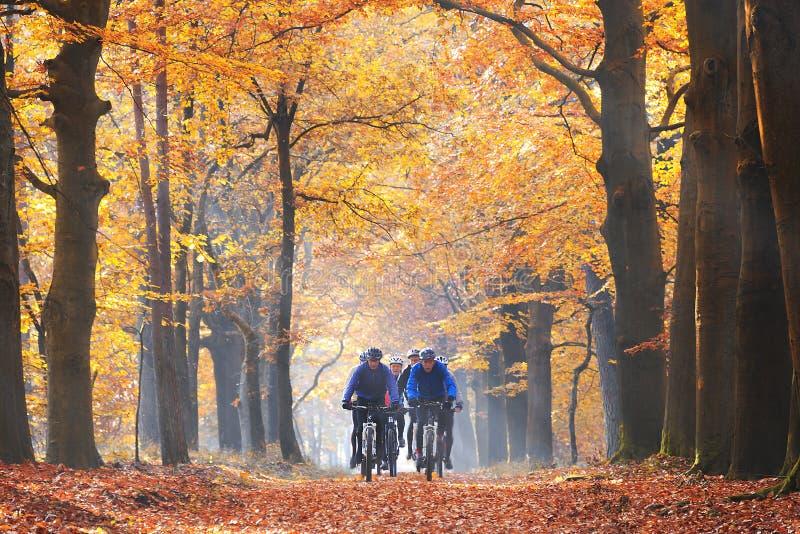 Amis faisant un cycle dans la forêt en automne photographie stock libre de droits