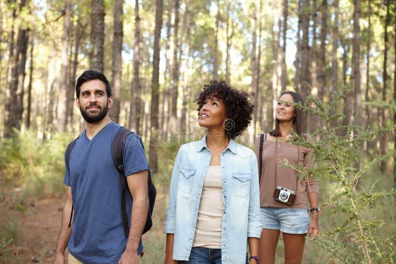 Download Amis Recherchant Dans La Forêt Image stock - Image du ahead, regarder: 76080071