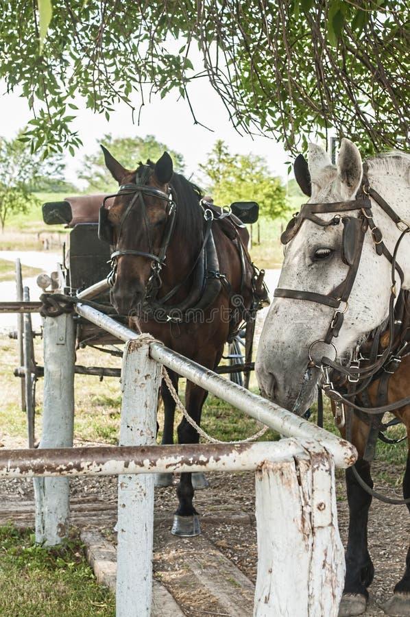 Amische Pferde gebunden an einem einhängenden Beitrag lizenzfreies stockbild