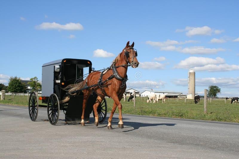 Amische Pferdekutsche stockbild