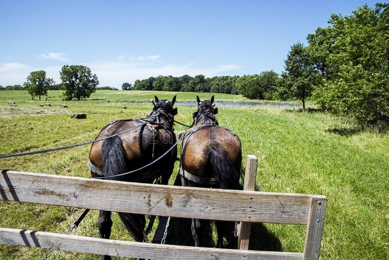 Amisches Pferd gezeichneter Heulastwagen lizenzfreie stockfotos