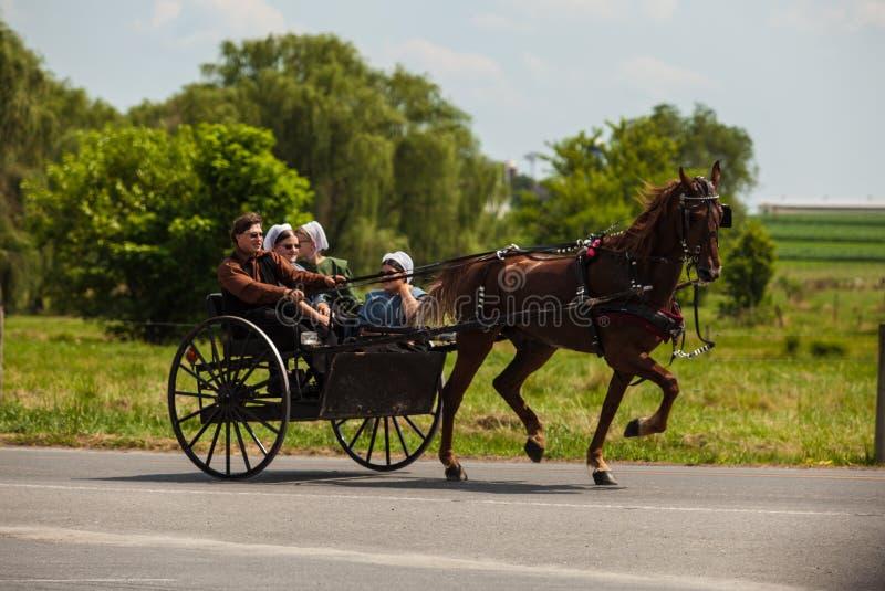 Amisches Pferd u. Buggy lizenzfreie stockfotos