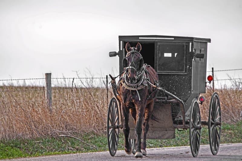 Amisches Pferd und Buggy lizenzfreie stockfotografie