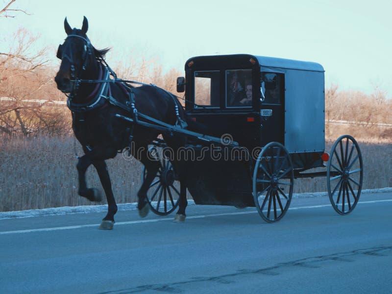 Amisches Pferd und Buggy stockbild