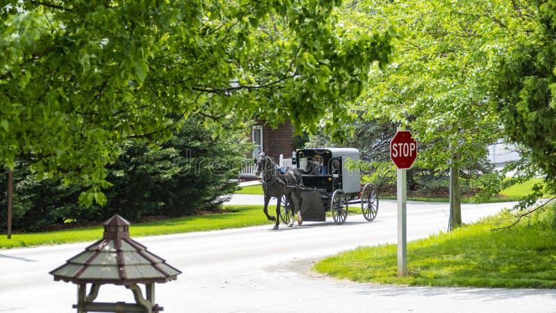 Amisches Pferd und Buggy, die die Straße hinuntergeht lizenzfreies stockfoto