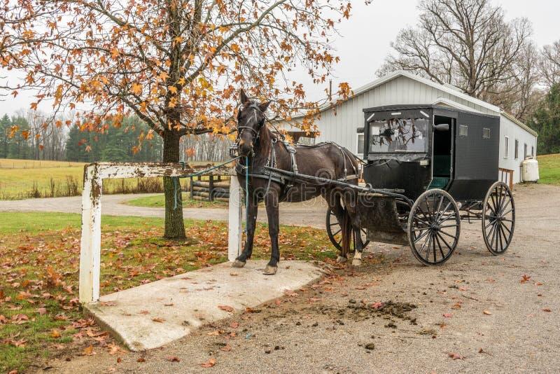 amish με λάθη άλογο στοκ εικόνες