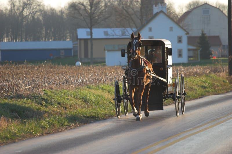 amish με λάθη άλογο στοκ φωτογραφία