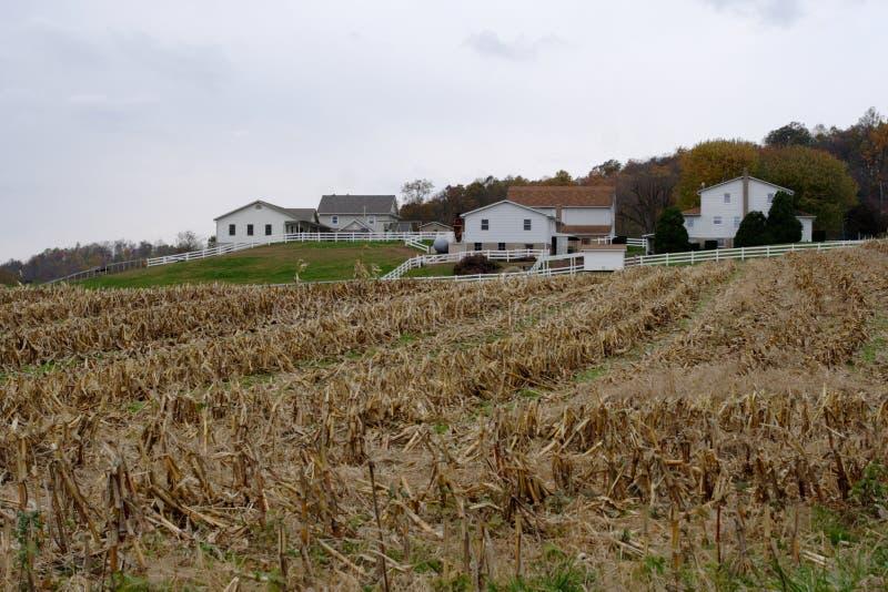 Amish fotografia stock