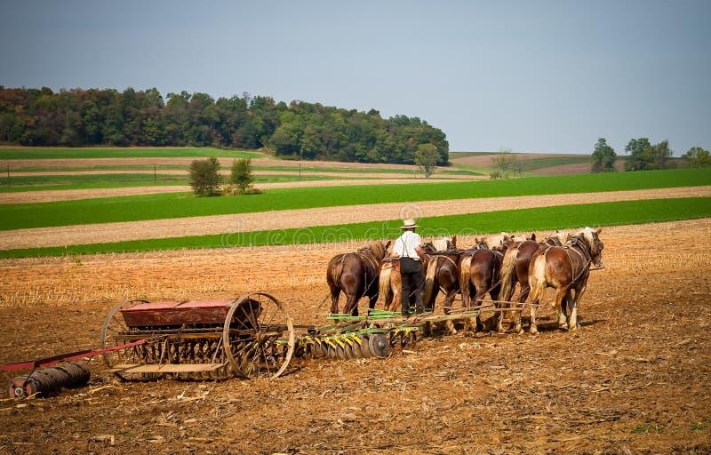 Amish arbete royaltyfri bild