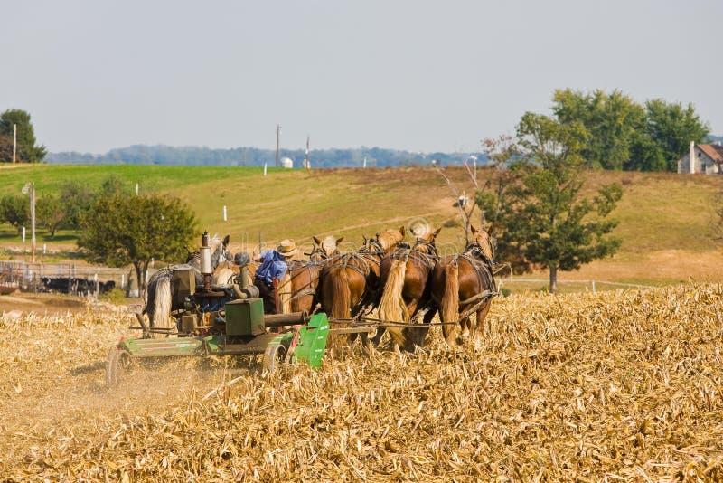 Amish arbete arkivfoton