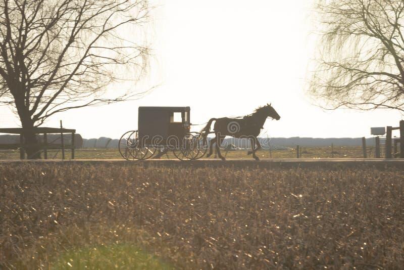 Amish barnvagn som dras av en travare, Lancaster County, PA royaltyfri foto