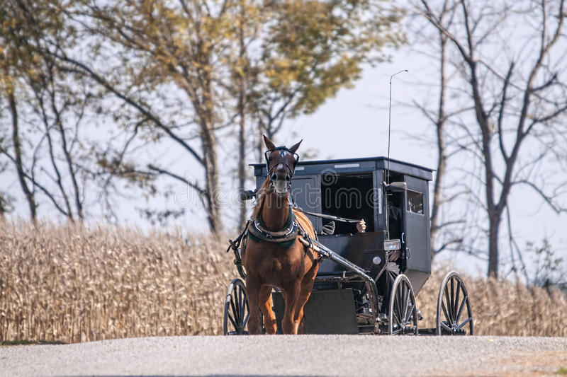 Amish buggy on a country road. An Amish buggy passing a corn field on a rural country gravel road royalty free stock image