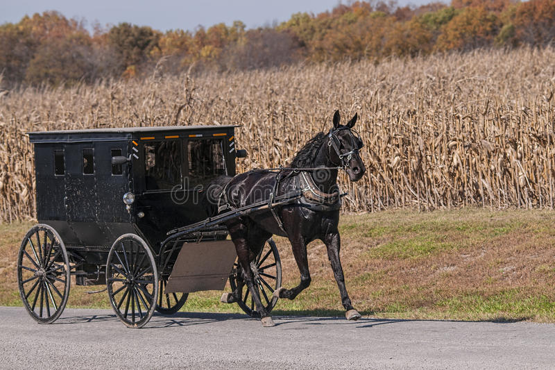 Amish buggy on a country road. An Amish buggy passing a corn field on a rural country gravel road stock images