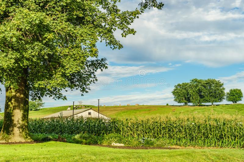 Amish country farm field agriculture and hoses in Lancaster, PA. US stock photography