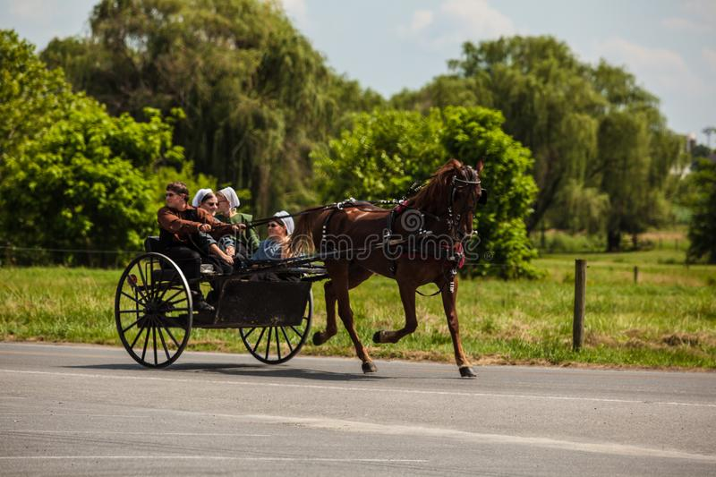 Amish Driving Two-Wheel Horse Buggy. Intercourse, PA, USA - June 24, 2012: Amish use a horse and buggy for transportation in the summer in Lancaster County, PA stock photo