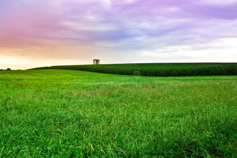 Amish Farm sunset. Beautiful Amish farm field with grass, silo and corn at sunset, Lancaster Pennsylvania stock photo