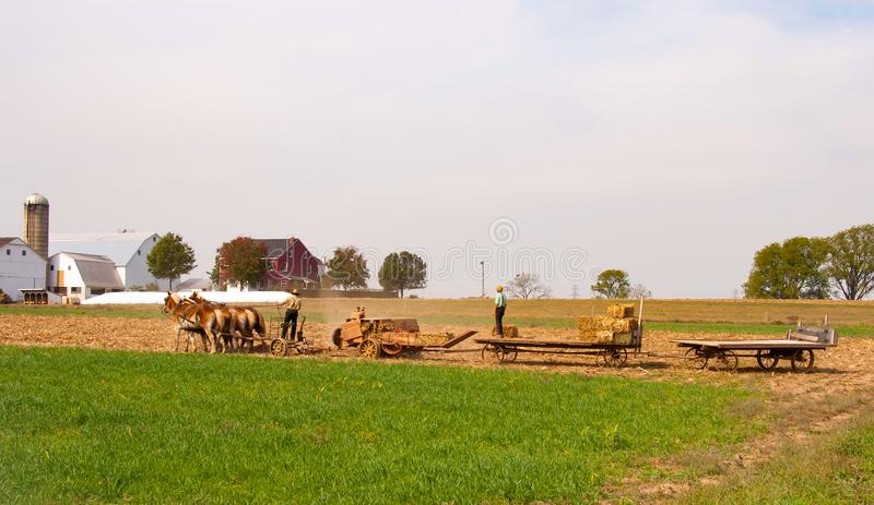 Amish Farmers bringing in the Hay. On a sunny autumn day stock image