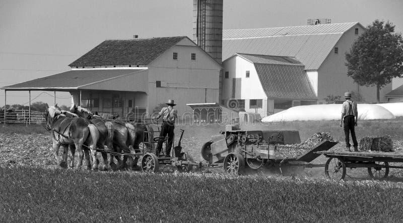 Amish Farmers Harvesting the Fields. Amish Father and Son Harvesting the Fields on a Autumn Day stock photos