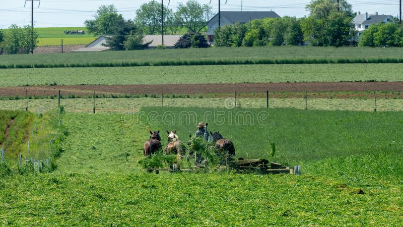Amish Farmers harvesting stock image