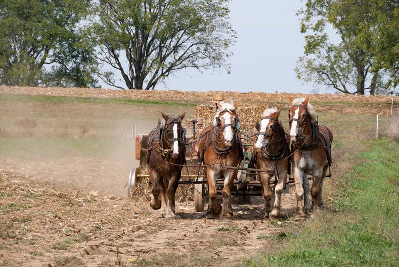 Amish Farmers Plowing stock photos