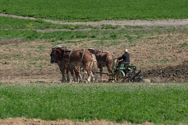 Amish Farmers Tilling the Earth royalty free stock photo