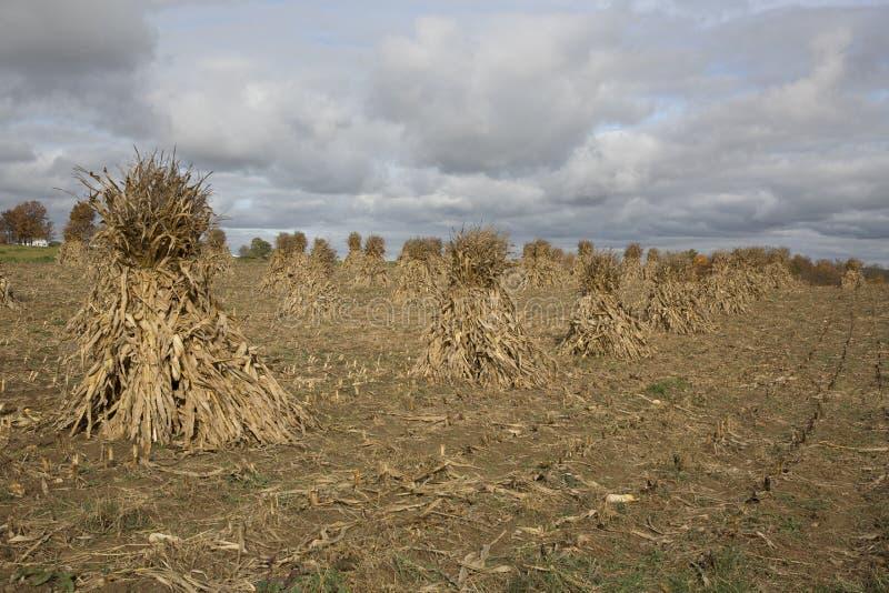 Amish gospodarstwa rolne przynoszą w spadku żniwie fotografia royalty free