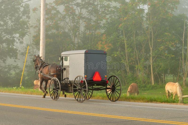 Amish häst och barnvagn på vägen royaltyfria foton