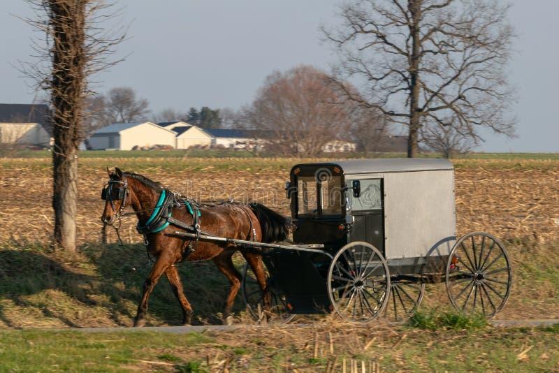 Amish hästbarnvagn som dras av en härlig brun häst, Lancaster County, PA royaltyfri foto