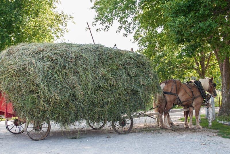 Amish hooi-wagen stock afbeeldingen