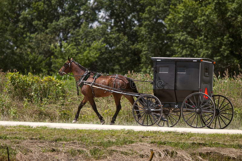Amish horse and black buggy royalty free stock image