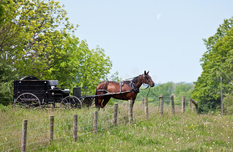 Amish horse and buggy. Tied to fence post royalty free stock photos