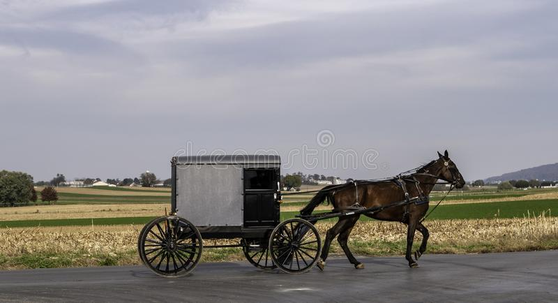 Amish Horse and Buggy 11 royalty free stock photos