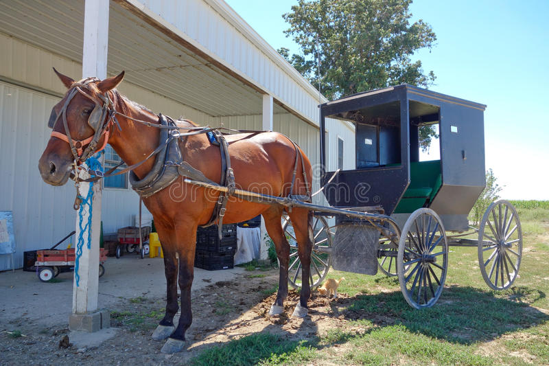 Amish horse and buggy in front of barn. This photo reflects the lifestyle of the Amish community in the midwest, in Clarke, Missouri. The horse and buggy are stock image