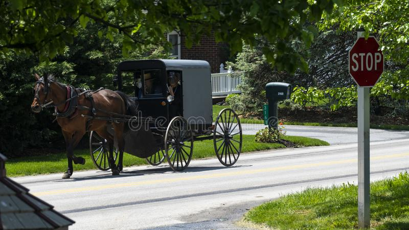 Amish Horse and Buggy going down the Road royalty free stock images