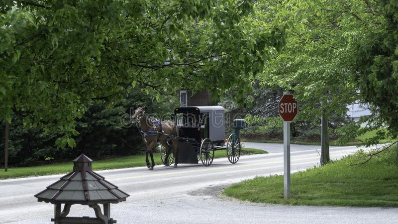 Amish Horse and Buggy 1 stock photos