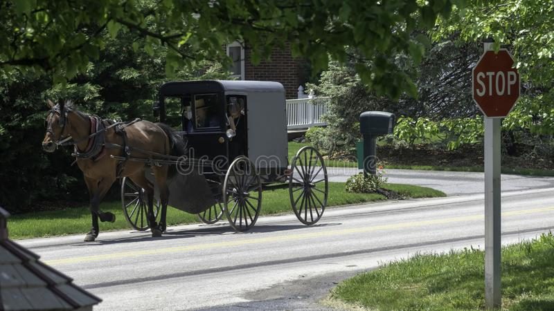 Amish Horse and Buggy 3 royalty free stock photography