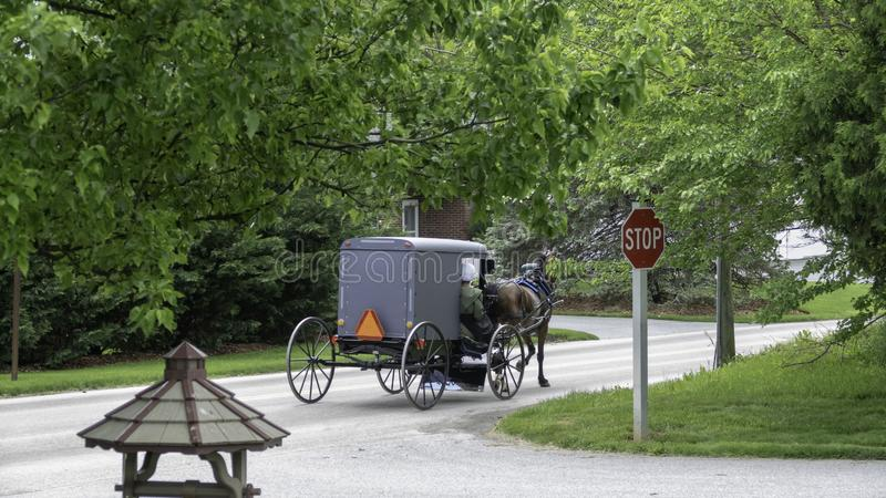 Amish Horse and Buggy 7 royalty free stock photography