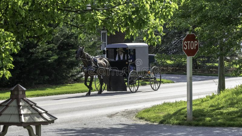 Amish Horse and Buggy 9 royalty free stock photos