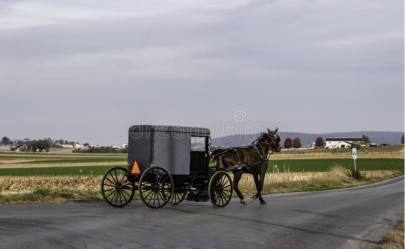 Amish Horse and Buggy 12 royalty free stock photos