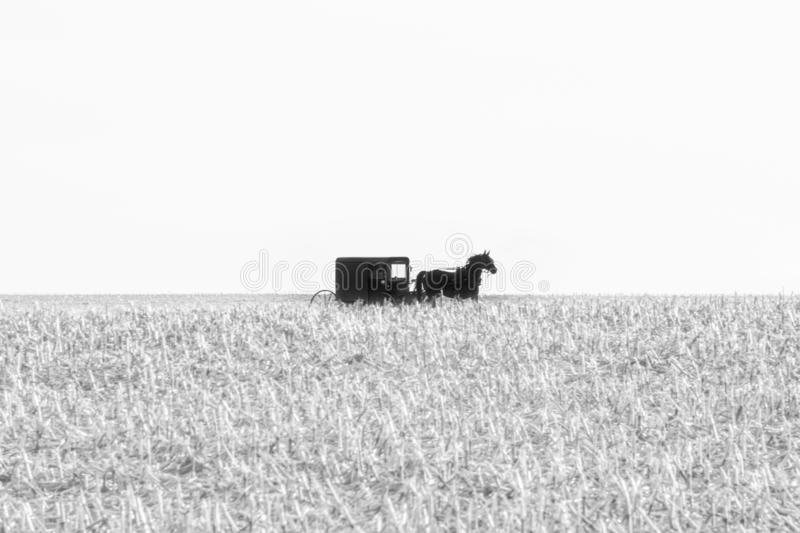 Amish horse-drawn buggy in a harvested field of corn in black and white, Lancaster County, PA stock photo