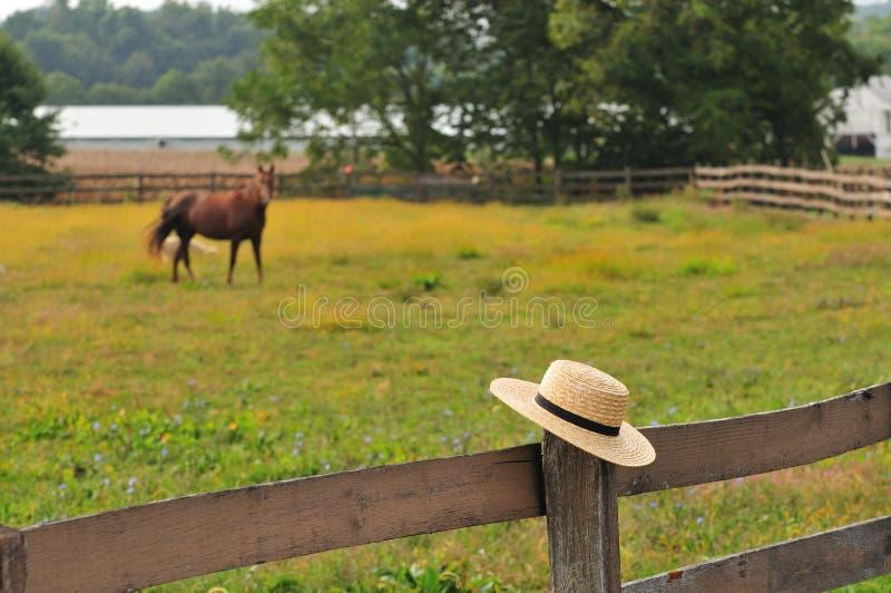 Amish kapelusz w konia gospodarstwie rolnym obraz royalty free