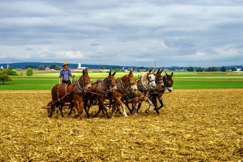 Amish kraj, PA zdjęcie stock