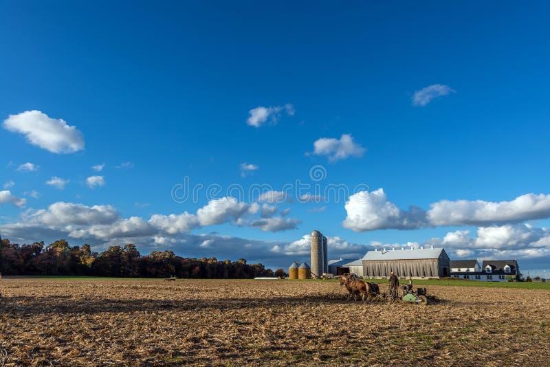Amish lantgård med Belgiam utkasthästar som drar en plog i höstne royaltyfri fotografi