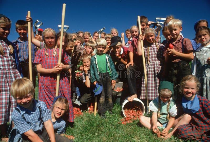 Amish lantgårdbarn arkivfoto